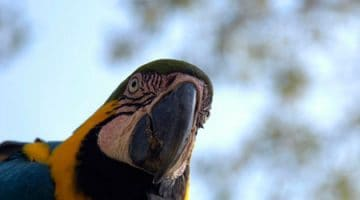 Fotos do Mato Grosso do Sul (Bonito e Pantanal)