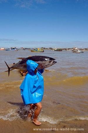 Pescador de atum em Itaipava