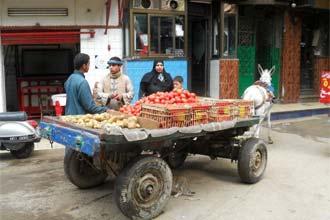 Vendedores de rua, Cairo
