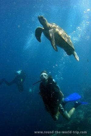 Um mergulhador observa uma tartaruga nas águas de Sipadan, próximo da ilha Mabul