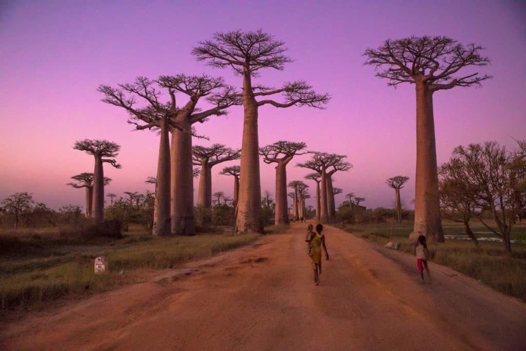 A vida ao fim do dia na Avenida dos Baobabs