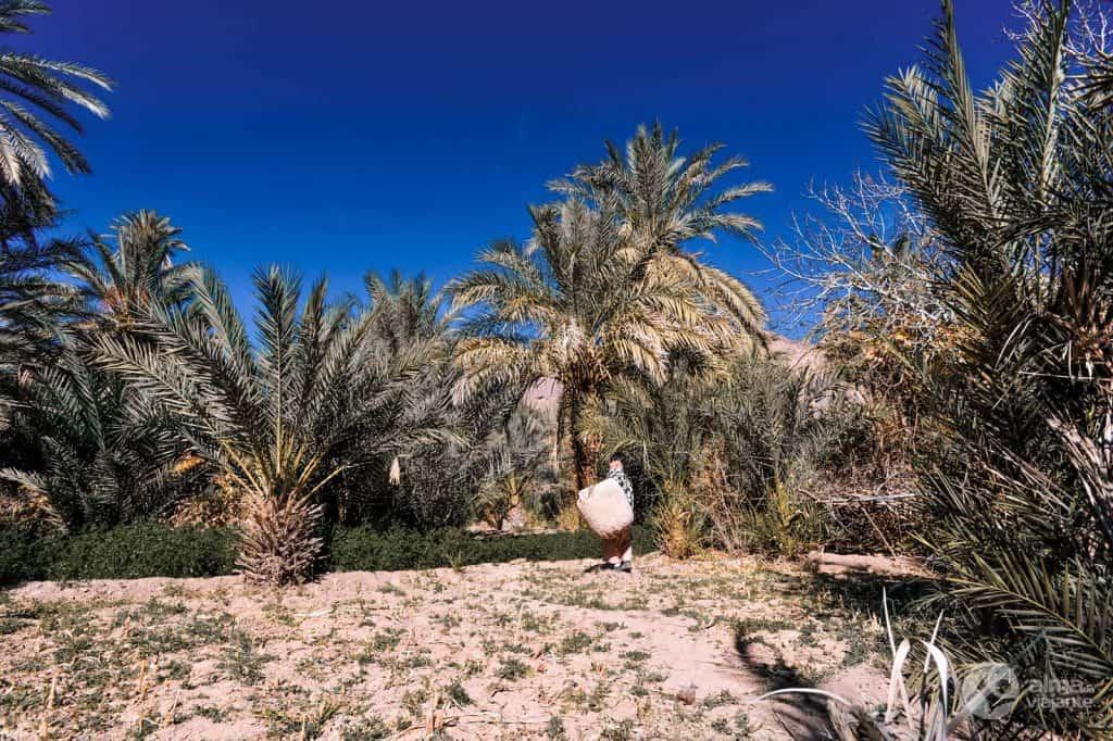 Palmeiral no oásis Fint, Marrocos