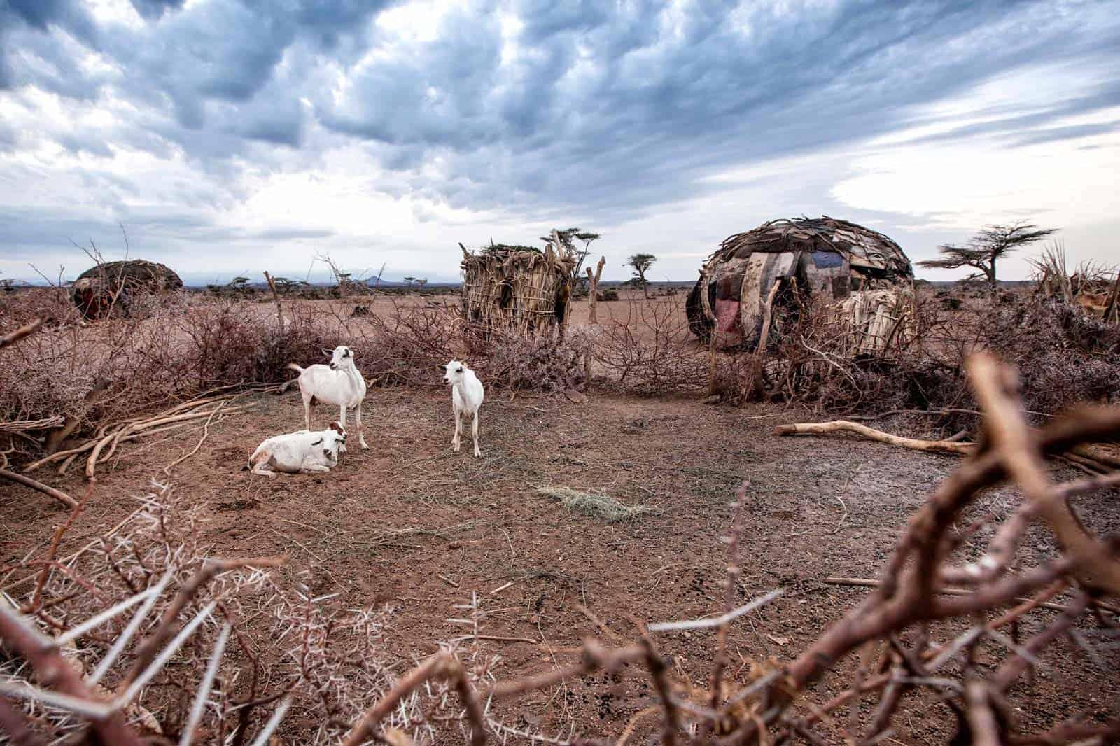 A Samburu törzs faluja, Kenya