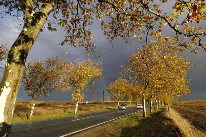 Estrada entre Reguengos de Monsaraz e São Pedro do Corval, Alentejo