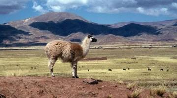 Rota do altiplano boliviano