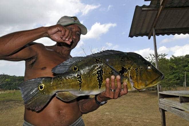 Exibindo um tucunaré acabado de pescar