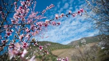 Passeio às Amendoeiras em Flor com a CP