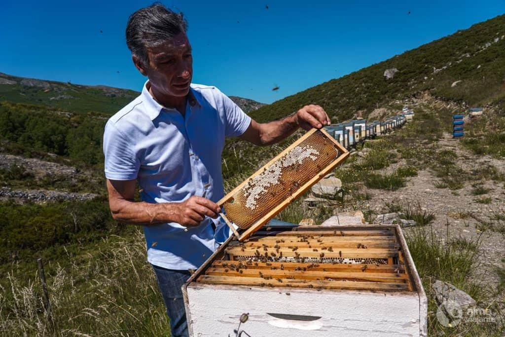 Colmeias de abelhas mansas na Branda da Aveleira