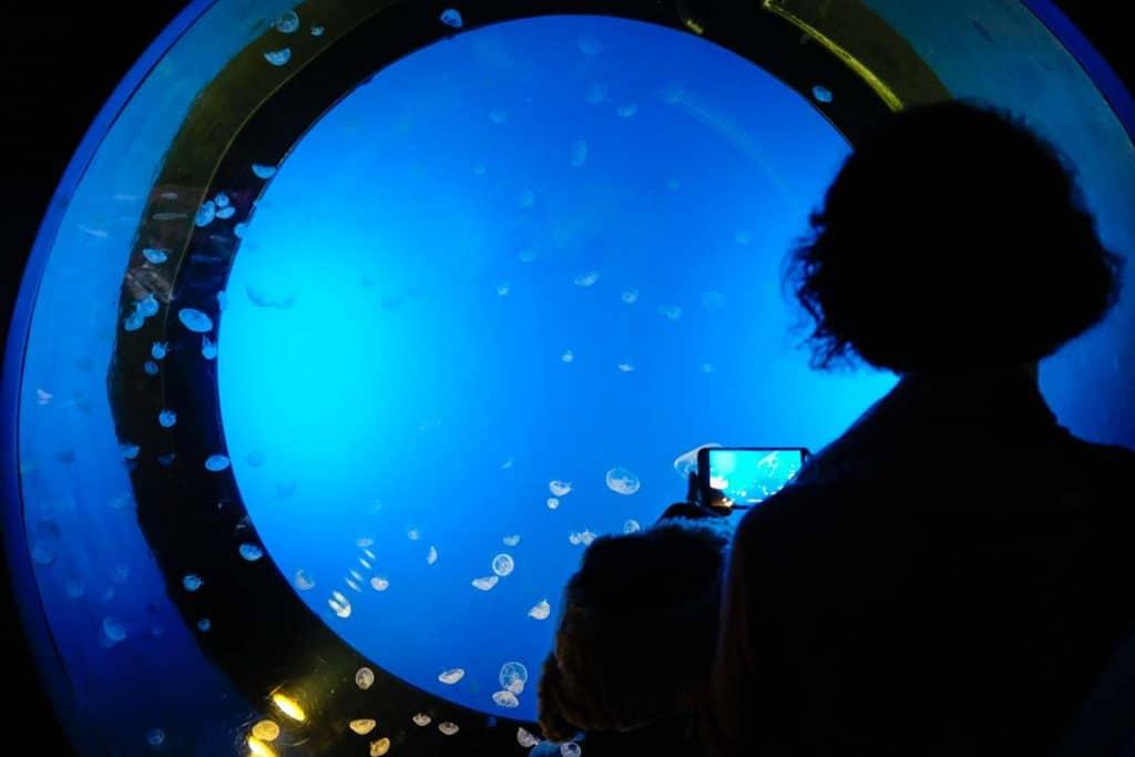 O que fazer em Donostia: visitar o Aquário