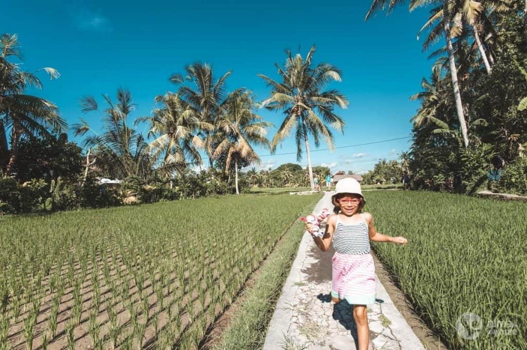 Arrozais de Ubud, Bali