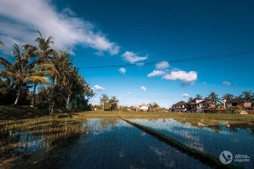 Arrozais em Ubud, Bali