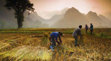 Dicas de viagem: Vietname
