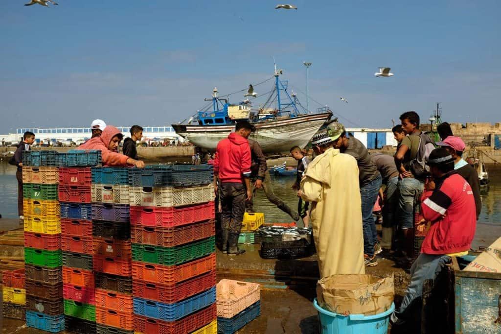 Descarga de peixe no porto de Essaouira