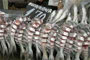 Pormenor de uma banca de peixe