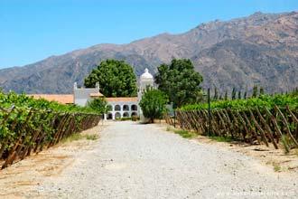 Quinta onde se produz o famoso vinho Torrentés, em Cafayate