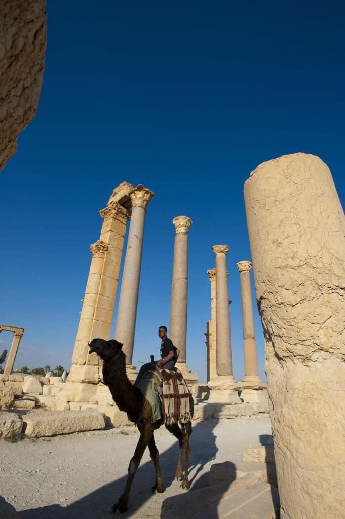 Camelo em Palmira