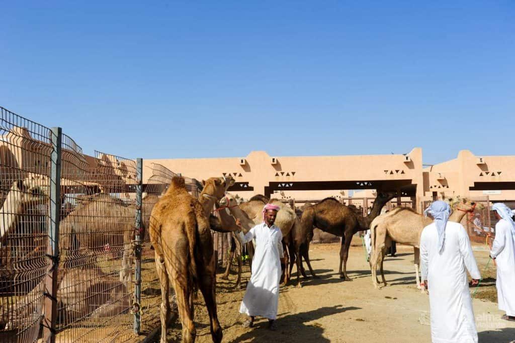 Souk de camelos