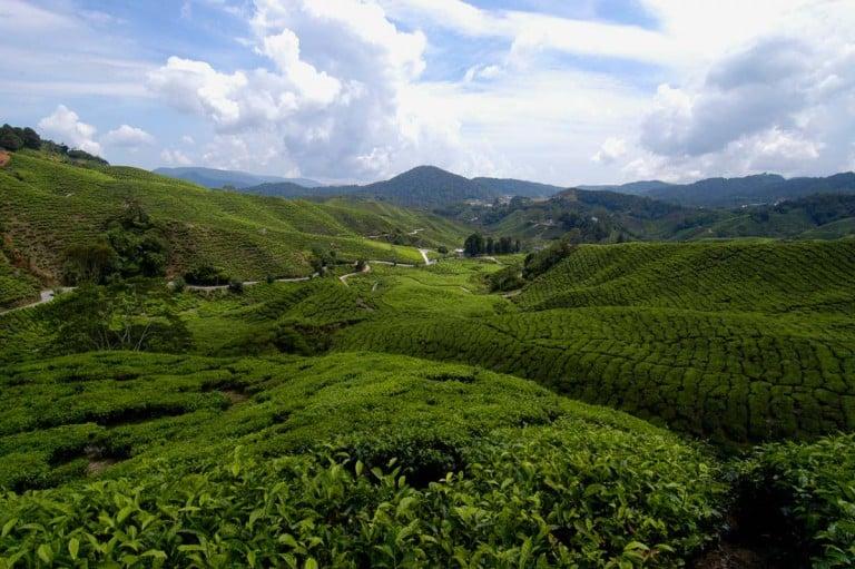 Visitar Cameron Highlands, Malásia