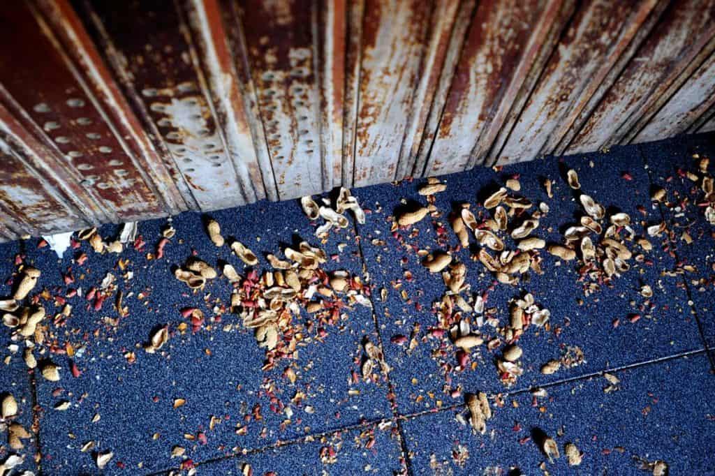 Cascas de amendoim indicam onde beber poncha na Madeira