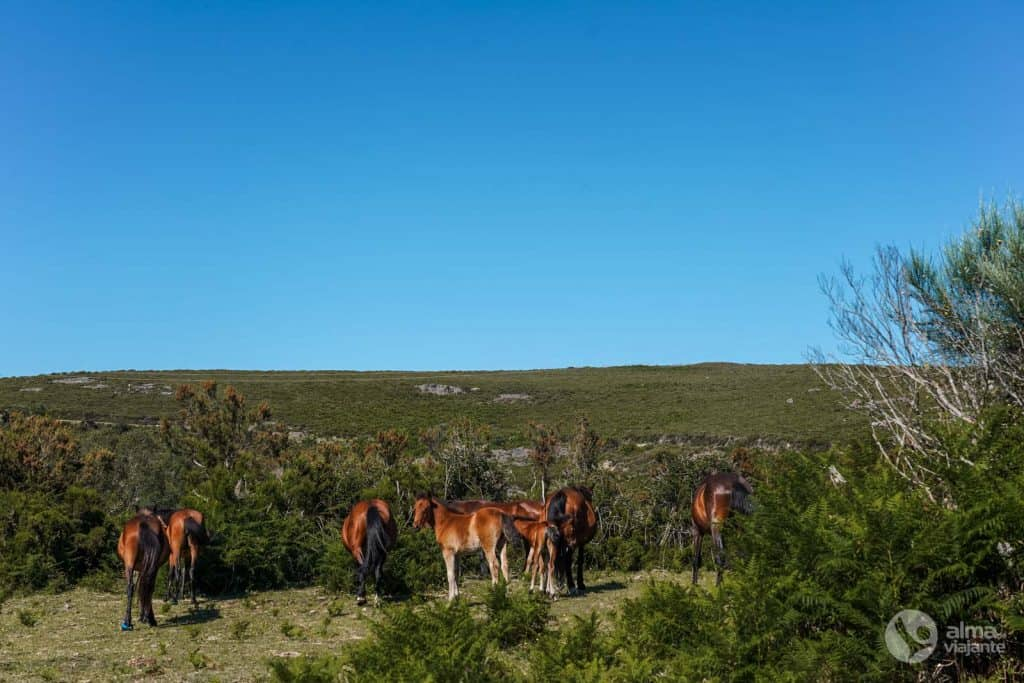 Cavalos garranos