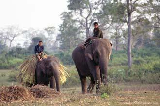 Elefantes em Chitwan