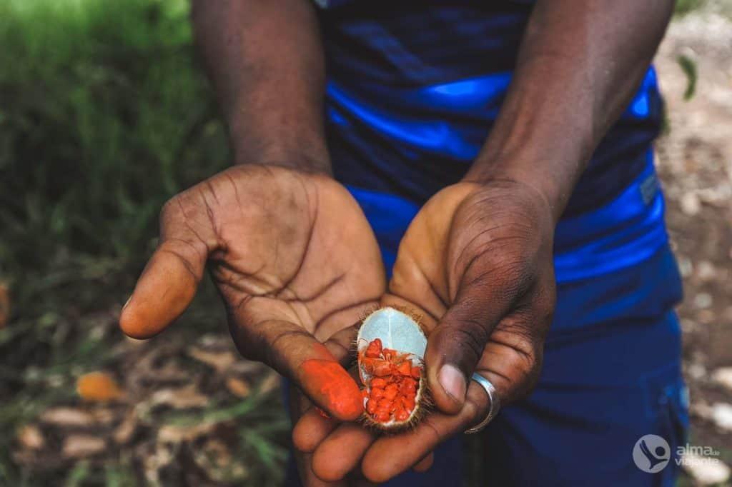 Especiarias de Zanzibar: urucu (colorau)