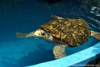 O projecto TAMAR, na Praia do Forte, visa proteger espécies de tartarugas em vias de extinção