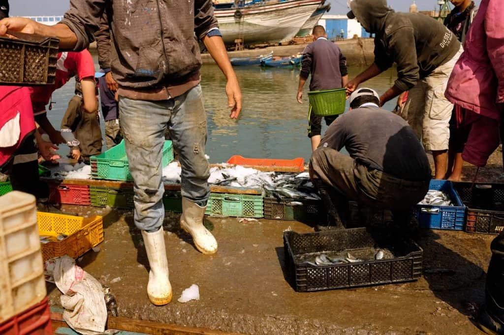 Descarga de peixe no porto de Essaouira, Marrocos