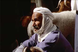 Mercado dos animais em Douz
