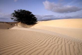 Dunas de areia na Boa Vista