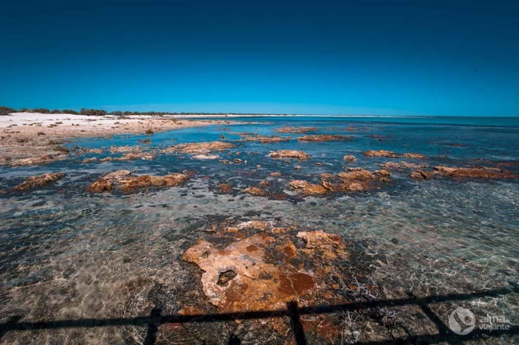 Hamelīna stromatolīti