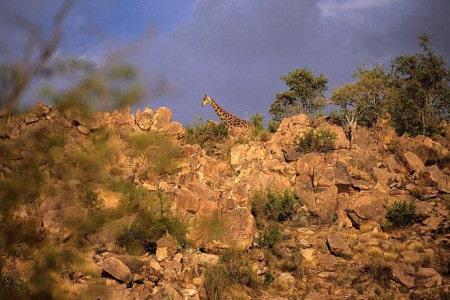 Safari na Namíbia