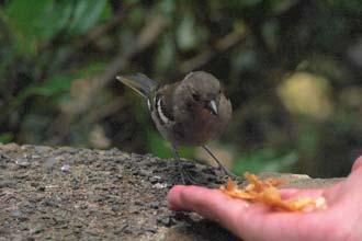 O contacto com os pequenos habitantes da floresta é um dos atrativos das caminhadas pelas levadas da Madeira