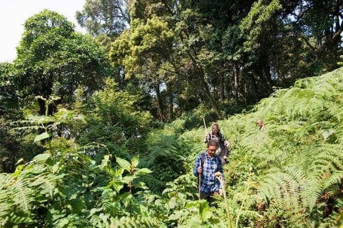 Biodiversidade em Bwindi