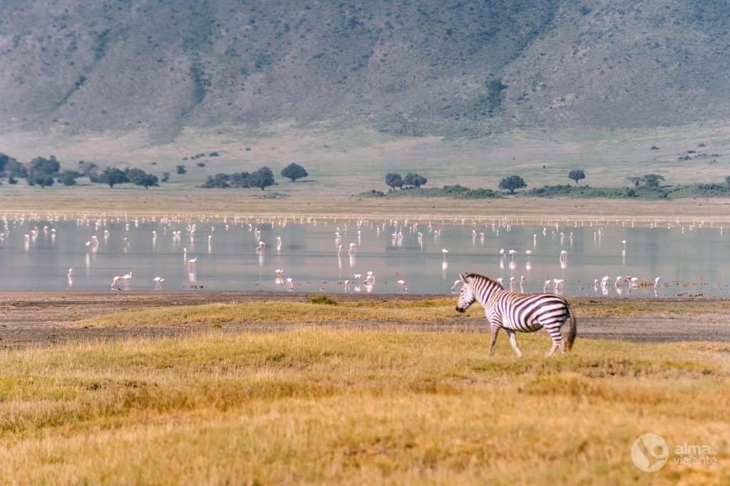 Látogatás Ngorongoro kráterben: Flamingók