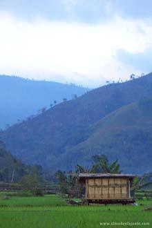 Vulcão Kalimantu, Flores