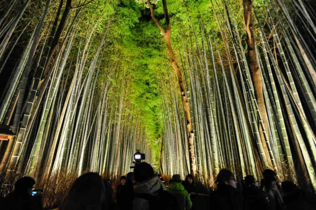 Arashiyama bambusa mežs izgaismots