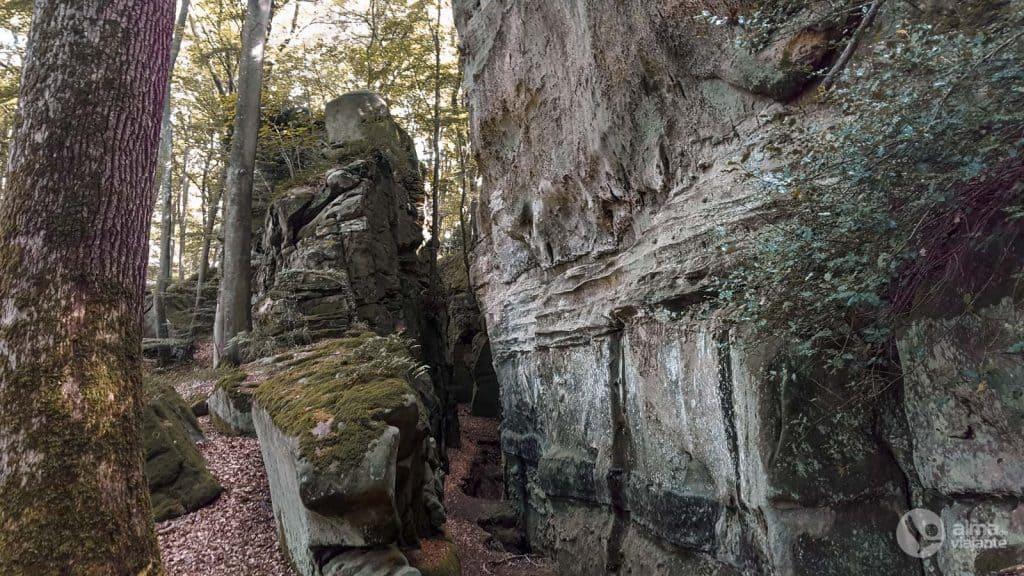 Berdorf Ormanları