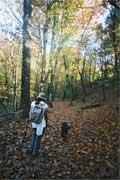 Trekking e caminhadas: Trilho para a milha XXXIII da Geira romana
