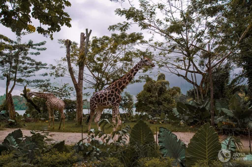Zoo de Singapura