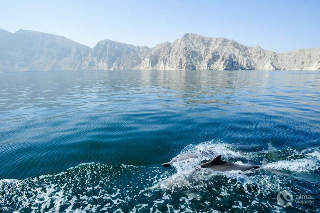 Golfinhos Musandam