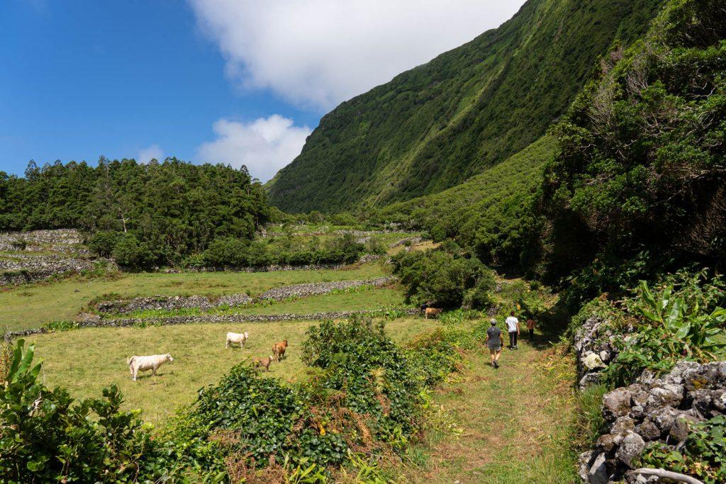 Paisagem na ilha das Flores