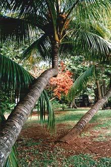 Náttúran var örlátur við Mauritian eyjaklasann