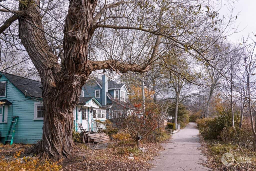 Casas na ilha Ward, Toronto