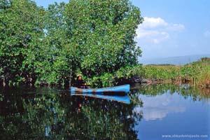 Pescador no Black River, Jamaica