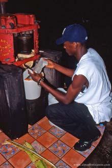 Moagem artesanal de cana-de-açúcar, Appleton, Jamaica