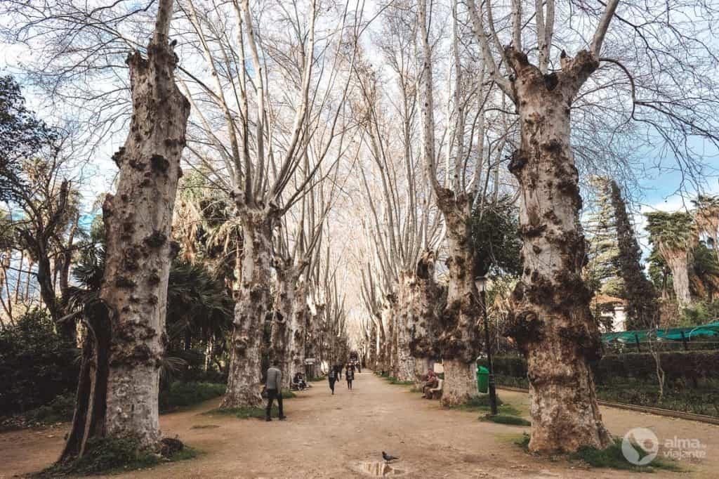 O que fazer em Argel: Jardim botânico El-Hamma