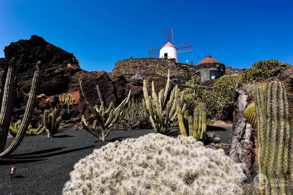Lanzarotė lankytinos vietos: apsilankykite Kaktusų sode