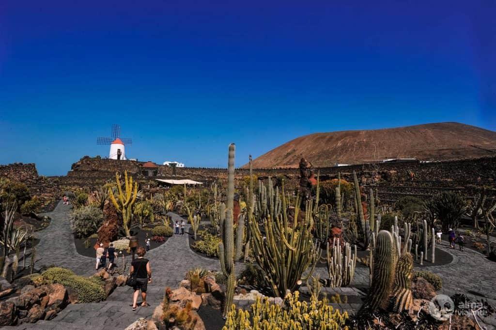 Garden of the Cacti, Lanzarote