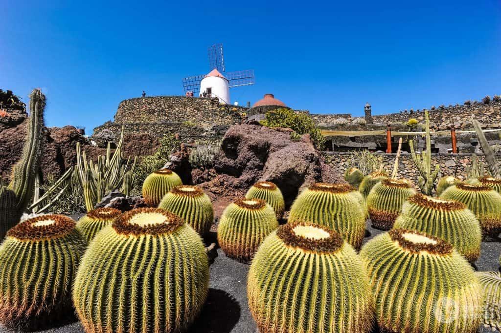 Garden of the Cacti Lanzarote